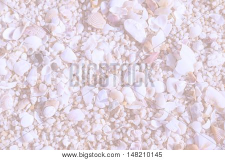 Abstract Sea Shells On Tropical Beach Background.