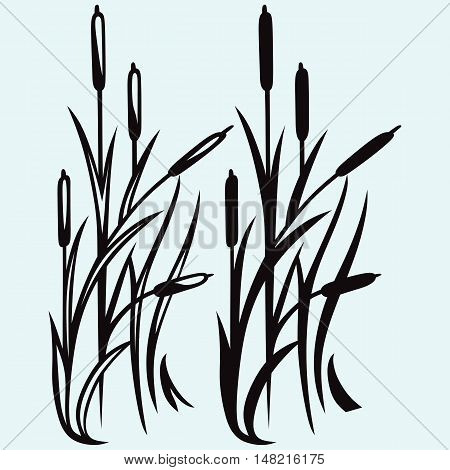 Reed. Isolated on white background. Vector style