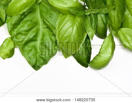 Horizontal Frame of Fresh Green Lush Foliage Basil Leafs closeup on White Plank background
