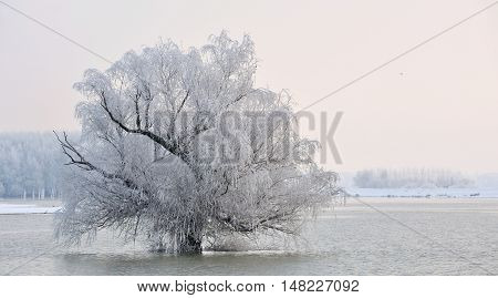 Frosty winter tree on Danube river, close up