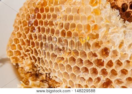 Close Up View Of The Honeycomb With Sweet Honey.
