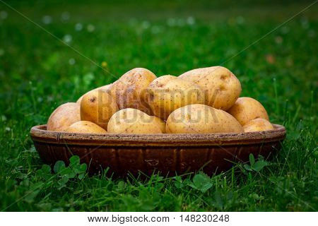 Pile of potatoes arranged on grass. Horizontal position.