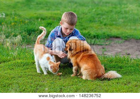 little boy in a plaid shirt feeds homeless cat and redhead stray dog in the yard