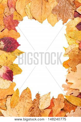 Vertical Picture Frame From Yellow Autumn Leaves