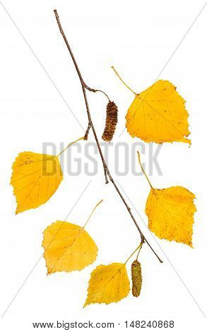 Twig With Yellow Autumn Leaves Of Birch Tree