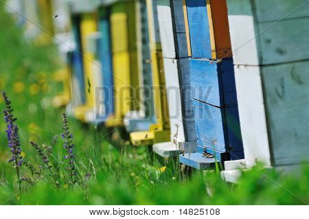 bee home at meadow with flowers and fresh green grass on spring season