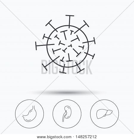 Virus, stomach and kidney icons. Liver linear sign. Linear icons in circle buttons. Flat web symbols. Vector