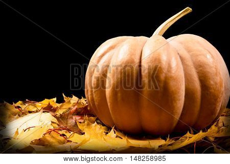 Big orange pumpkin on yellow maple leaves, autumn background with empty space for text