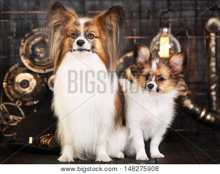 Beautiful dogs breeds papillon on a dark background in the style of steampunk