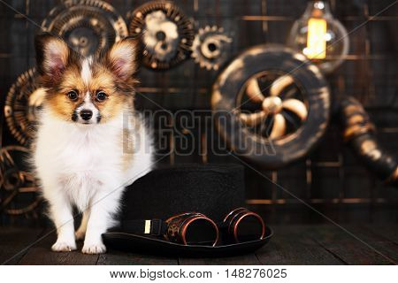 Beautiful puppy breeds papillon on a dark background in the style of steampunk