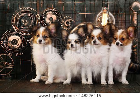 four puppies breeds papillon on a dark background in the style of steampunk