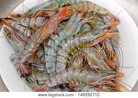 Big Pile of Fresh Tiger Shrimp Seafood