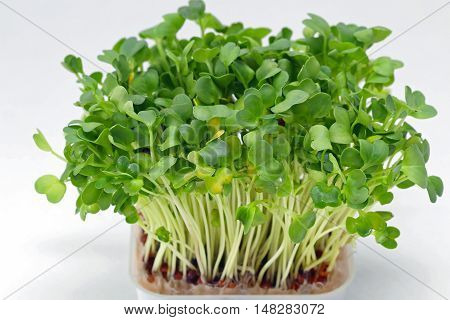 Fresh Edible Healthy Green Watercress in Tray