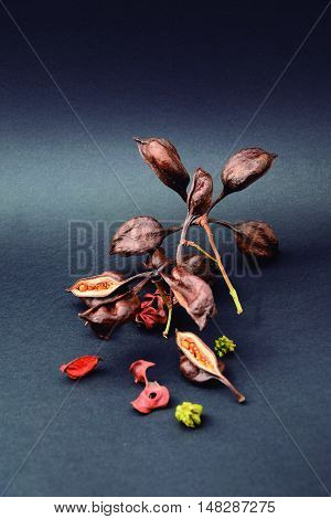 After falling from the trees, its fruits and flowers are drying indifference.