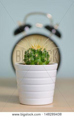 Single cactus and alarm clock warning