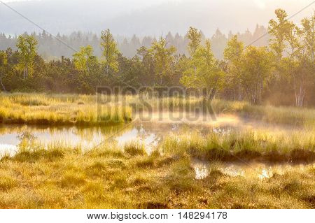 Autumn landscape with swamp,forest with standing water
