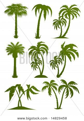 Set van Palm Tree silhouetten