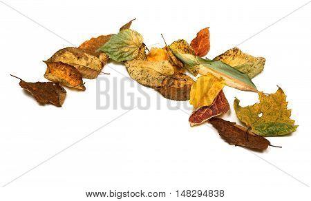 Dried Autumn Leafs