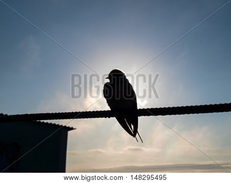 Silhouette swallow sitting on a wire against the sky