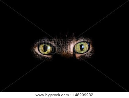 Animal eyes and partial face with fading dark background.