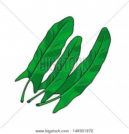 Three leaves of sorrel isolated on a white background. Hand drawn. Vector illustration.
