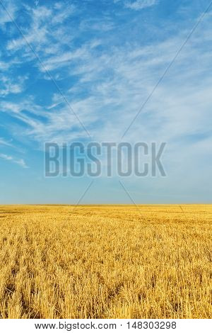 Autumn stubble field after wheat harvesting on the background of blue sky with clouds