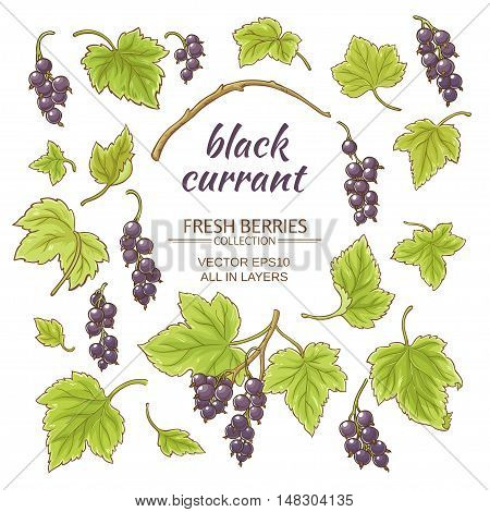 black currant elements vector set on white background
