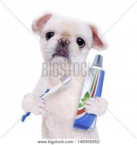Brushing teeth dog . Isolated on the white.