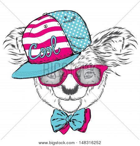 Cute koala in a cap and a tie. Australia.