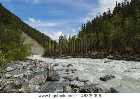 rough mountain river. Katun - Altay. Rocks and trees