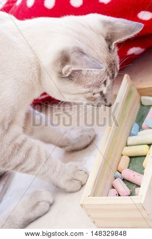 White cat looks at chalk box with colorful chalks