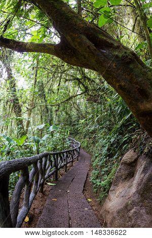 Nature Trail In Costa Rica