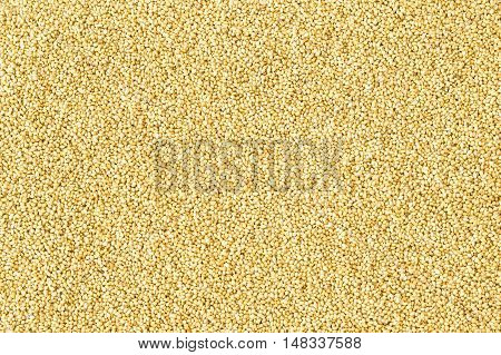 Foxtail millet grains filled in as background