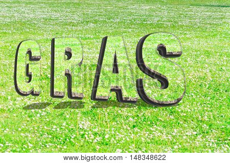 The word grass in green grass structure in 3D with shadows on a summer meadow as background.