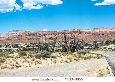 Mesas and dead trees along Interstate 70 in Utah