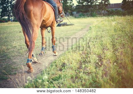 horse with rider is on a track field, space for text. film tuning