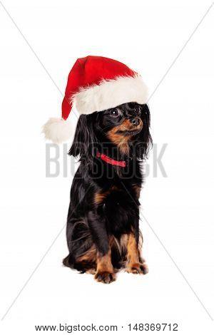 Dog in Santa Hat Isolated on White Background