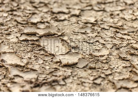 Dry Ground Background