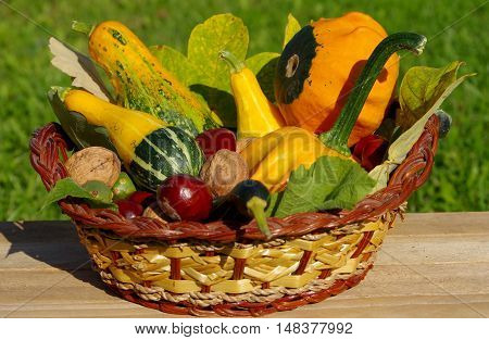 Ornamental pumpkins walnuts and conkers as a decoration in basket