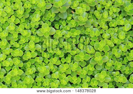 Unknown Green Plant Texture