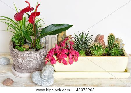 Potted plants close-up. room flowers in pot