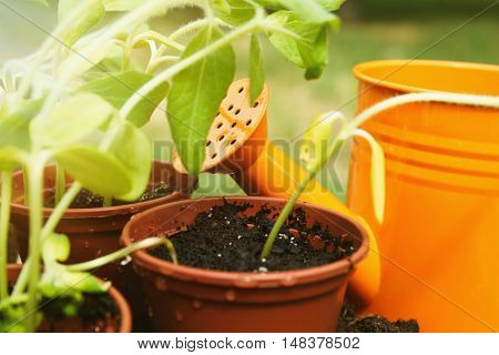 Seedling in pots with orange watering can