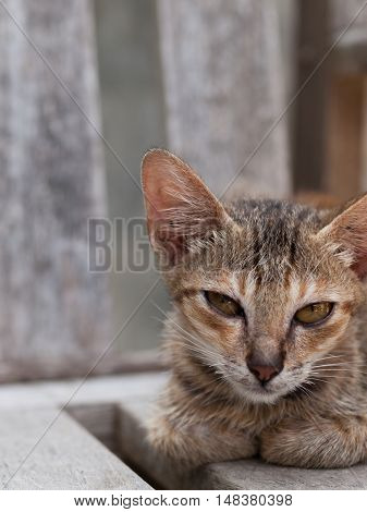 A GREY CAT LYING ON WOODEN CHAIR
