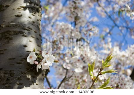 Tree Stam With Flowers