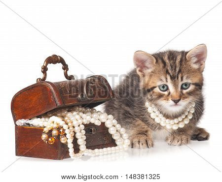 Fashionable kitten protects a wooden chest with pearls isolated on white background