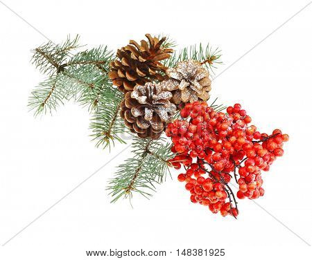 Strobiles, guelder berries and  pine-tree branch isolated on white