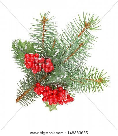 Mistletoe berries and pine-tree branch isolated on white