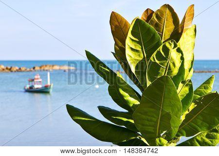 Asia    Bay The  Koh Phangan  Isle White  Beach    Rocks  Boat