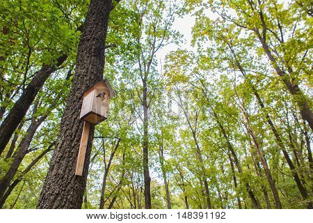 Birdhouse for birds on a tree in the forest. Bird nesting box on tree