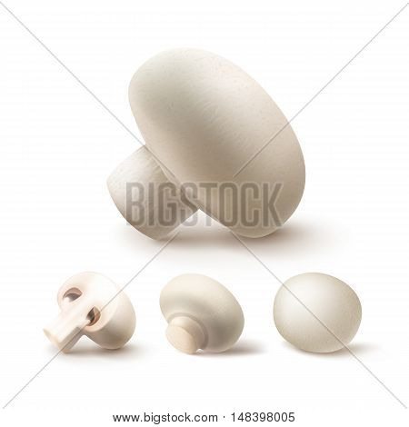 Vector Set of Fresh Whole and Sliced Half White Portabello Agaricus  Champignons Mushrooms Close up Isolated on White Background